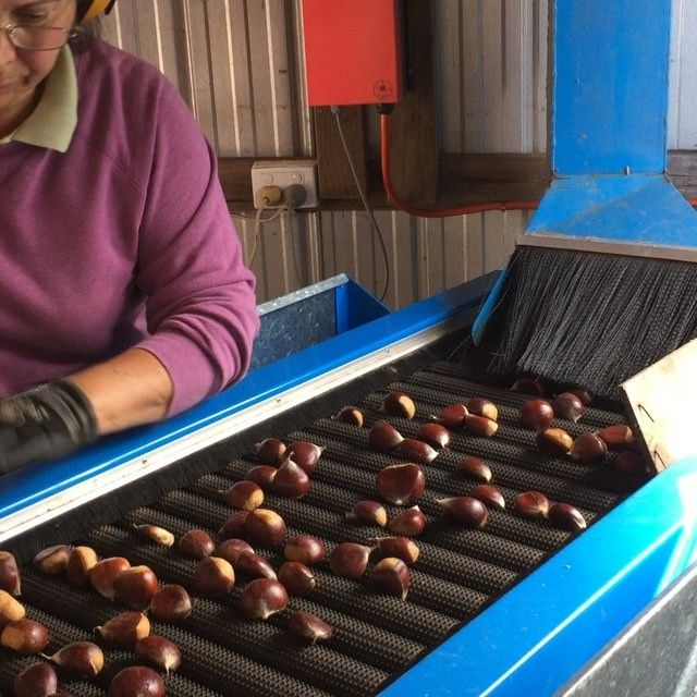 Did you know chestnuts get graded into sizes? Small, Medium, Standard, Large 1 right though to Large 4. Smaller nuts are better for roasting as they cook evenly through. There are plenty of good quality nuts heading to markets all round Australia, stock up for Easter, a great food to enjoy while camping or relaxing at home!! @stefanogmanfredi @myfoodbook @belindajefferyfood @thefoodcoach @austcheznuts @fastedmedia @wandifulproduce @suedodd4 @sydneymarkets @bbqaroma #nuts30days30ways…