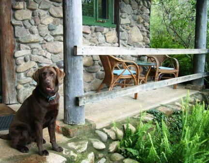 B&B accommodation Bega Sapphire Coast NSW Charlie on steps of pet friendly cottage