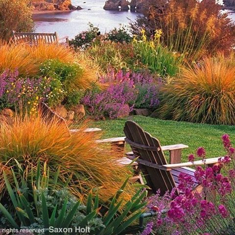 1190 best ornamental grasses images on pinterest for Garden design winter 2018