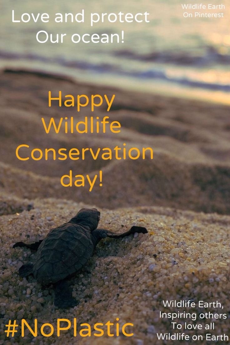 Happy Wildlife Conservation Day! Always love and protect the ocean and it's wildlife.