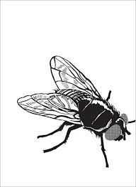 A fly = The perfect logo for a secret agency = A fly on the wall