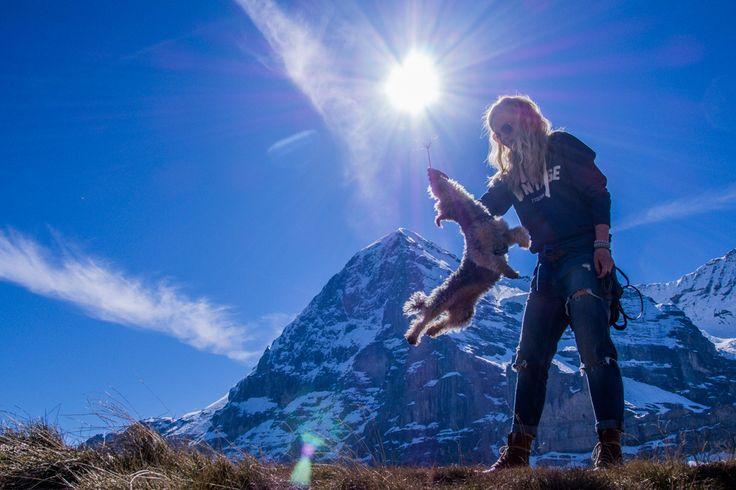 Lu the dog at Kleine Scheidegg in Switzerland. #dogtravel #switzerland #alps