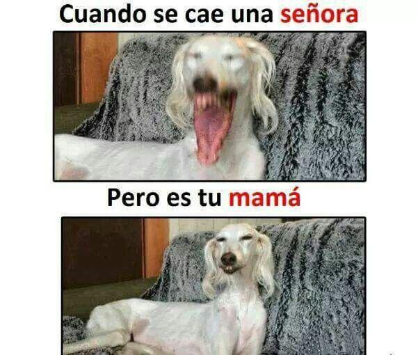 Q Yo Me Sigo Riendo Memes Divertidos Memes Memes Perros