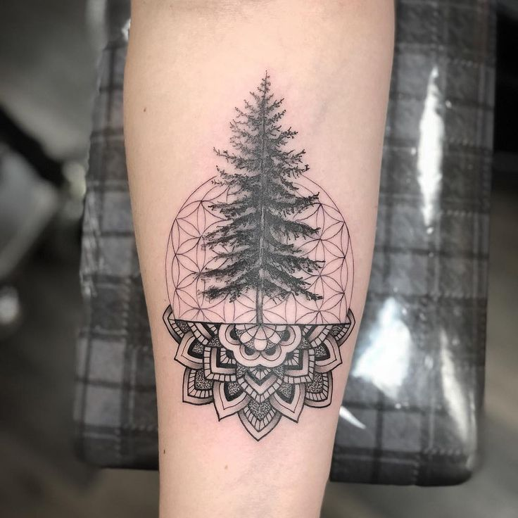 Simple and Easy Pine Tree Tattoo – Designs & Meanings (2019) – Page 56 of 60