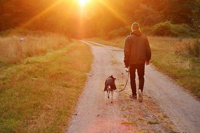 #dog #tramonto #friends #cane
