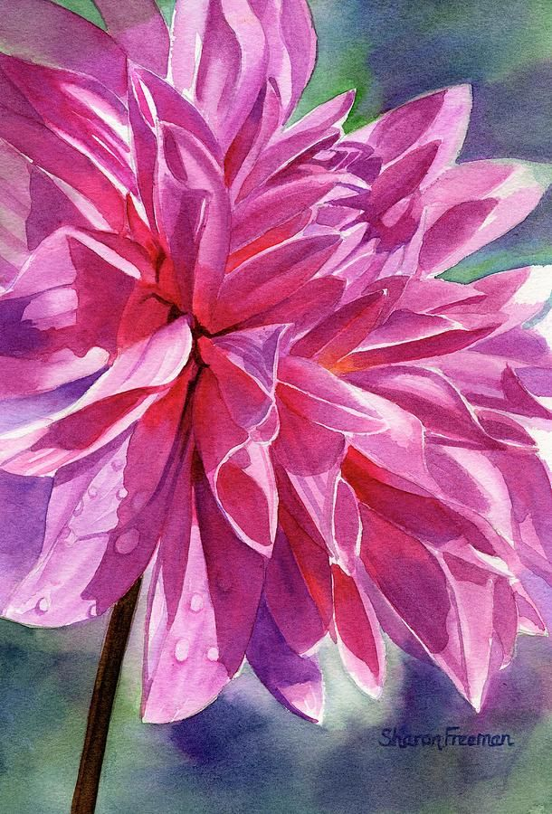Warm Red-violet Dahlia   Print..., Watercolour and By