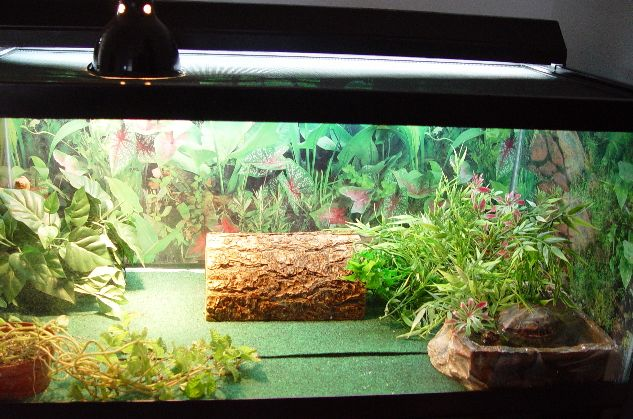 + images about Turtle tank plans on Pinterest Box turtles, Turtle ...