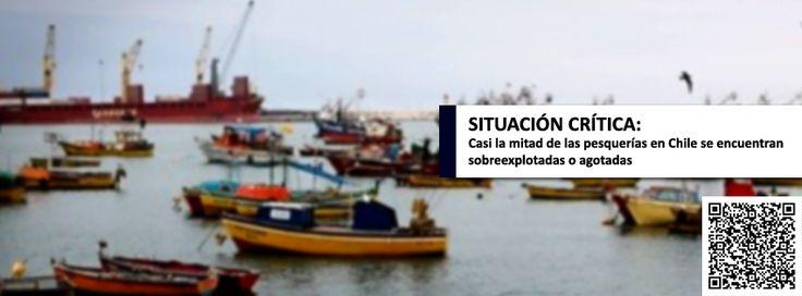 """Un total de 16 pesquerías chilenas se encuentran en una situación """"crítica"""", según reveló un informe de la Subsecretaría de Pesca y Acuicultura, que precisa que el 48 % están en situación de sobreexplotación. #Chile #pesca http://ow.ly/virAF"""