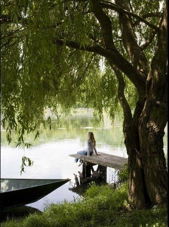dockWater, The Ponds, Dreams, Peace Places, Alone Time, Weeping Willow, Quiet Time, Lakes, Trees