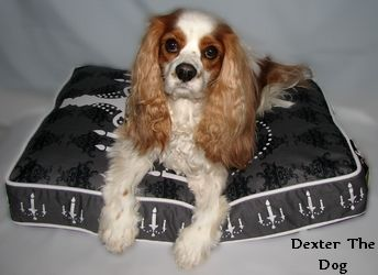 If you are like me, your dog's comfort is a must.  Most dogs love to rest & sleep in dog beds.  Dog beds come in a variety of sizes from XS dog beds to XL dog beds.  The styles are endless too!  You can get anything from a basic dog crate bed or mat to an upscale dog bed, even custom dog beds are available.  You may need to consider a durable dog bed, especially if you have a dog who likes to chew.  Chew proof dog beds, or dog beds that are indestructible do not exist.