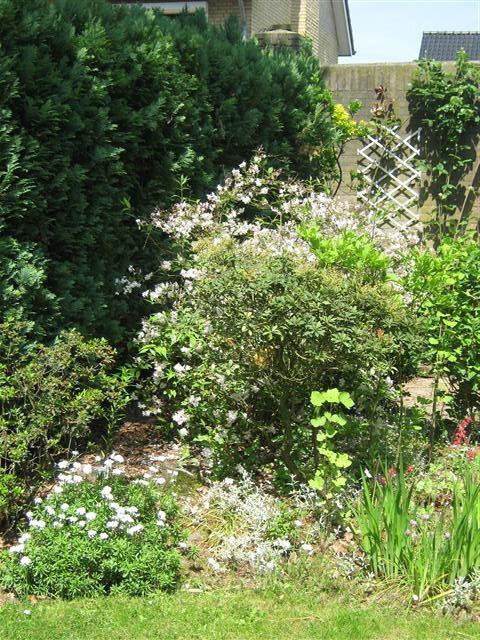 Low Maintenance Backyard Trees :  maintenance yard, Low maintenance garden and Low maintenance plants