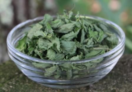 Подробное описание лечебных свойств и противопоказаний мяты перечной. Применение для женщин и мужчин. Как сушить и заваривать мяту для чая в домашних условиях