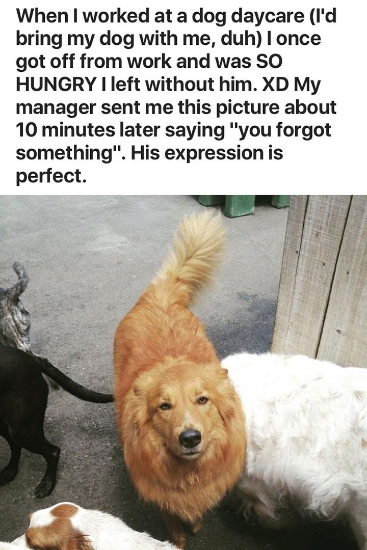 Funny Animal Pictures To Make You Laugh Out Loud - 22