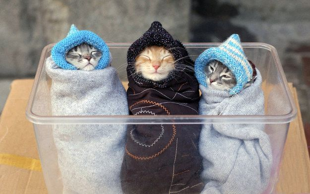 These cozy little purritos. | 39 Overly Adorable Kittens To Brighten Your Day