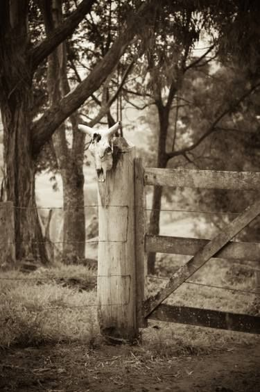 "Saatchi Art Artist Flavio Coelho; Photography, ""Bull skull and fence"" #fineart"