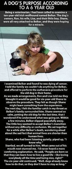 A dog´s purpose according to a six year old... please SHARE this beautiful thought! #Cute @PetPremium Pet Insurance Pet Insurance Pet Insurance