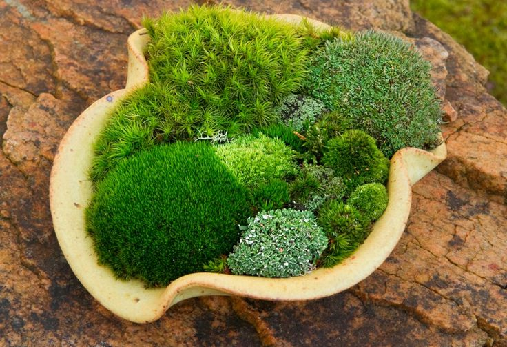 planting a variety of moss together in an interesting planter makes a big impact!