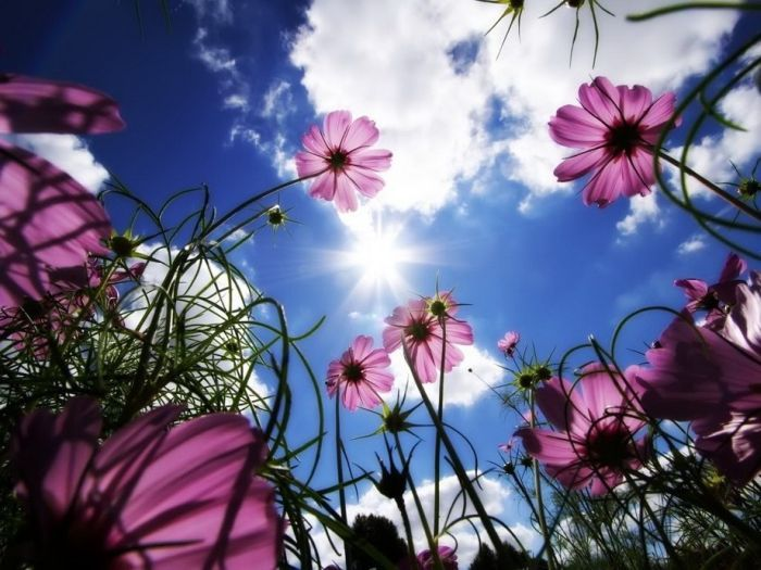 Makes me want to lay in a field of flowers and just watch the clouds roll by.