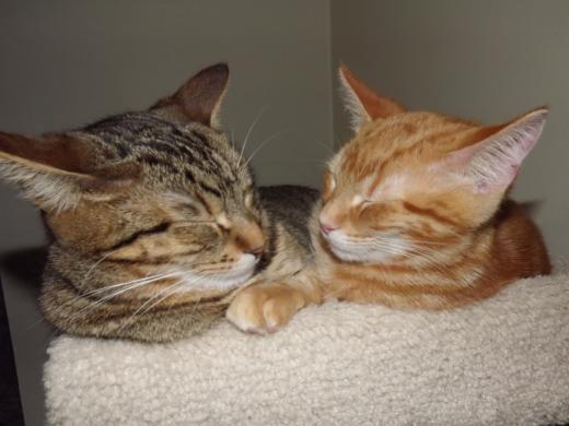 Luna and Oliver