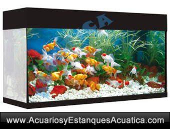 ** ENVIO GRATIS! 223.50€ ** ACUARIO AQUALUX 168 LITROS NEGRO FILTRO EXTERNO LED CALENTADOR INCLUIDOS http://acuariosyestanquesacuatica.com/acuarios-de-agua-dulce/181-acuario-aqualux-168l-filtro-led-calentador-incluidos.html#/color-negro/filtro-exterior_turbojet/mueble-sin_mueble