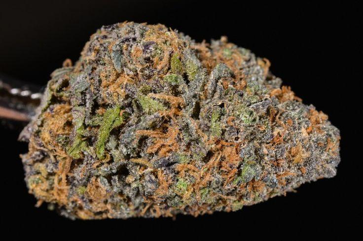 Granddaddy Purple (marijuana review, Strain Theory)
