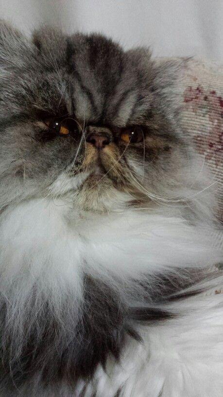 Gorgeous MissMolly
