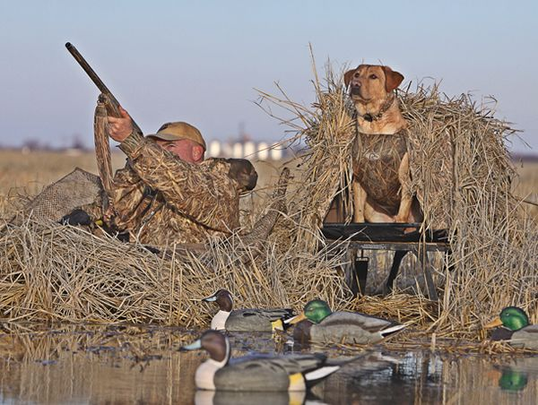 duck hunting waders | Duck Photos | Duck Hunting Pictures
