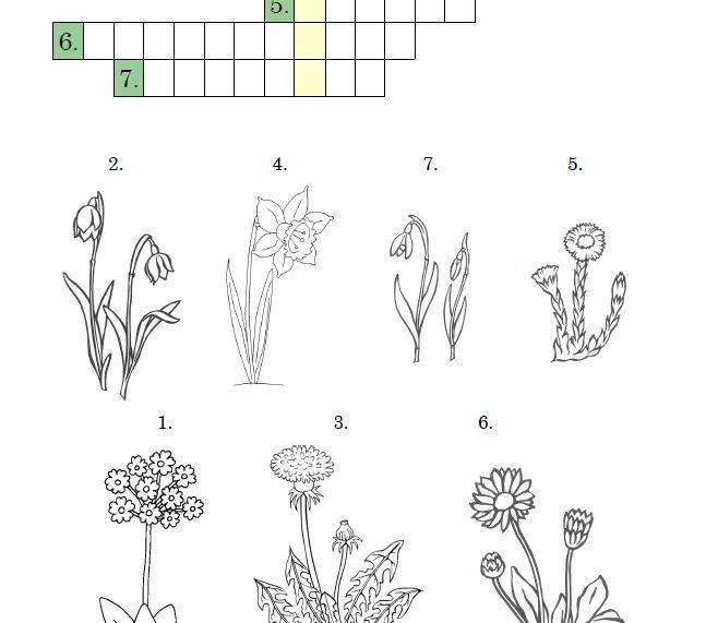 Jarní křížovka. Poznávání jarních rostlin.