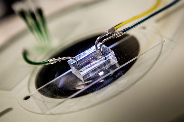 The University of Michigan's heartbeat on a chip