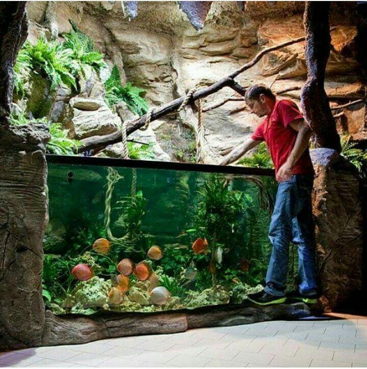 Fish tank aquariums pinterest fish tanks fish and for Outdoor fish aquarium