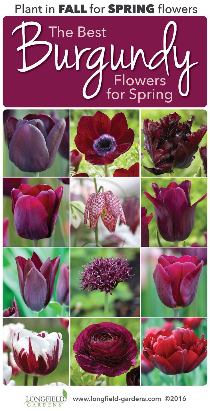 10 Best Burgundy Flowers Images On Pinterest Burgundy