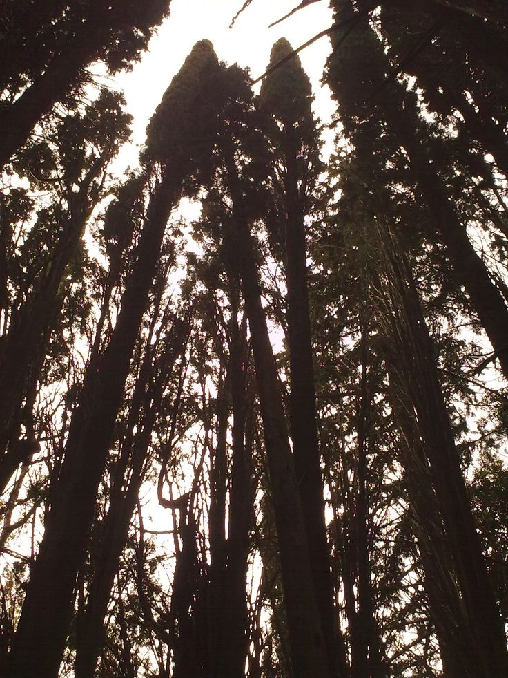 https://flic.kr/p/DtcZ2Y | Εικόνα0005 | Trees at Tatoi forest
