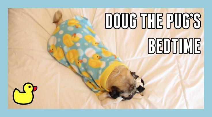 Doug the pug's bedtime (My family had a pug when I was growing up. I just love 'em! #christineemoya)