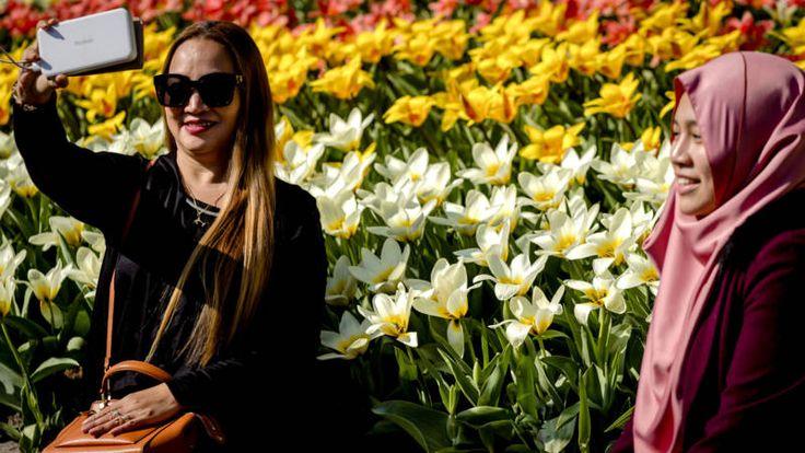 Nederland beleefde een zonnige dag en dat leverde mooie plaatjes op van vrolijke mensen, bomen in bloei en lammetjes in de wei.