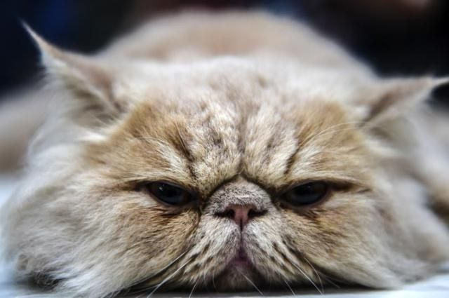 International Cat Day 2017 Quotes: 20 Sayings To Celebrate Your Favorite Felines