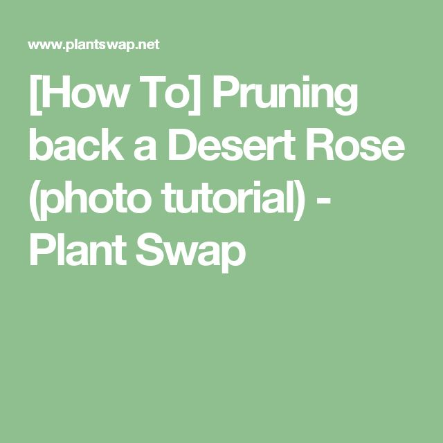[How To] Pruning back a Desert Rose (photo tutorial) - Plant Swap