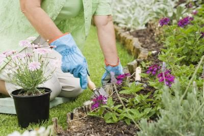 Epsom Salt to Control Vegetable Garden Pests/also a mosquito barrier product is advertised that sounds awesome if it works