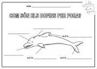 DianaEducació: vivències i recursos: Projecte dofins (1era. part)