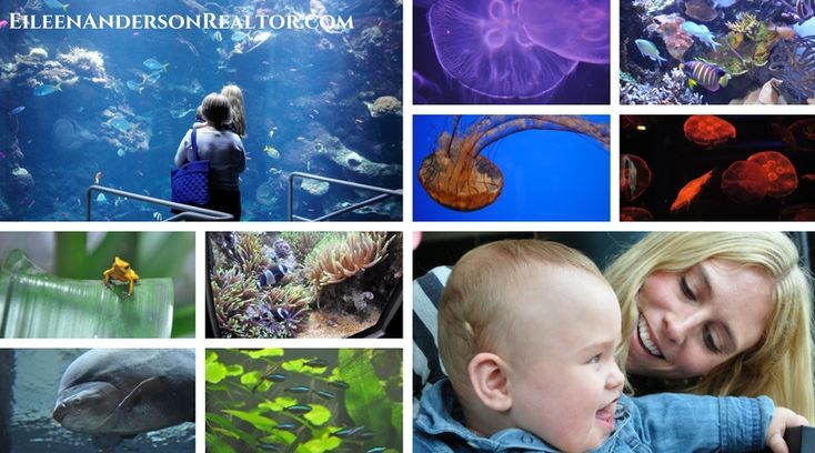 Mystic Aquarium, Things to do with Kids, things to do in Connecticut, CT shoreline, Mystic, CT