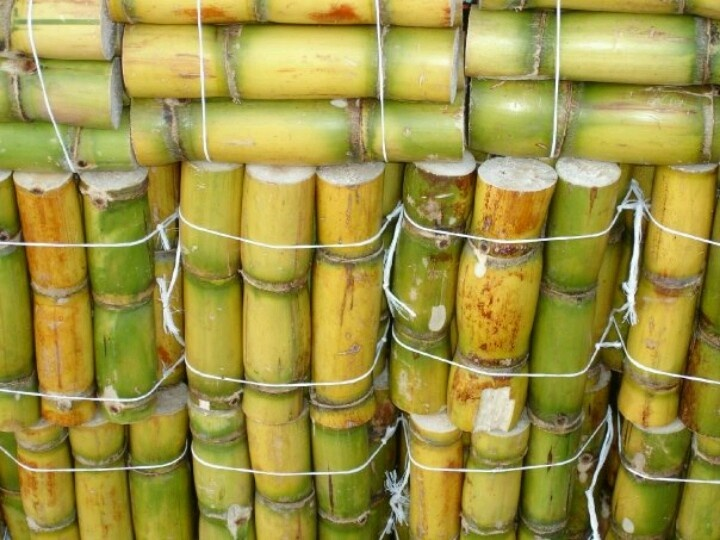 Caña para relleno de las piñatas, para el ponche caliente o para comerse solita, Sugar cane, as candy to fill the piñata (just in Christmas time), to prepare a hot traditional drink (ponche) or to eat  as a light snack.