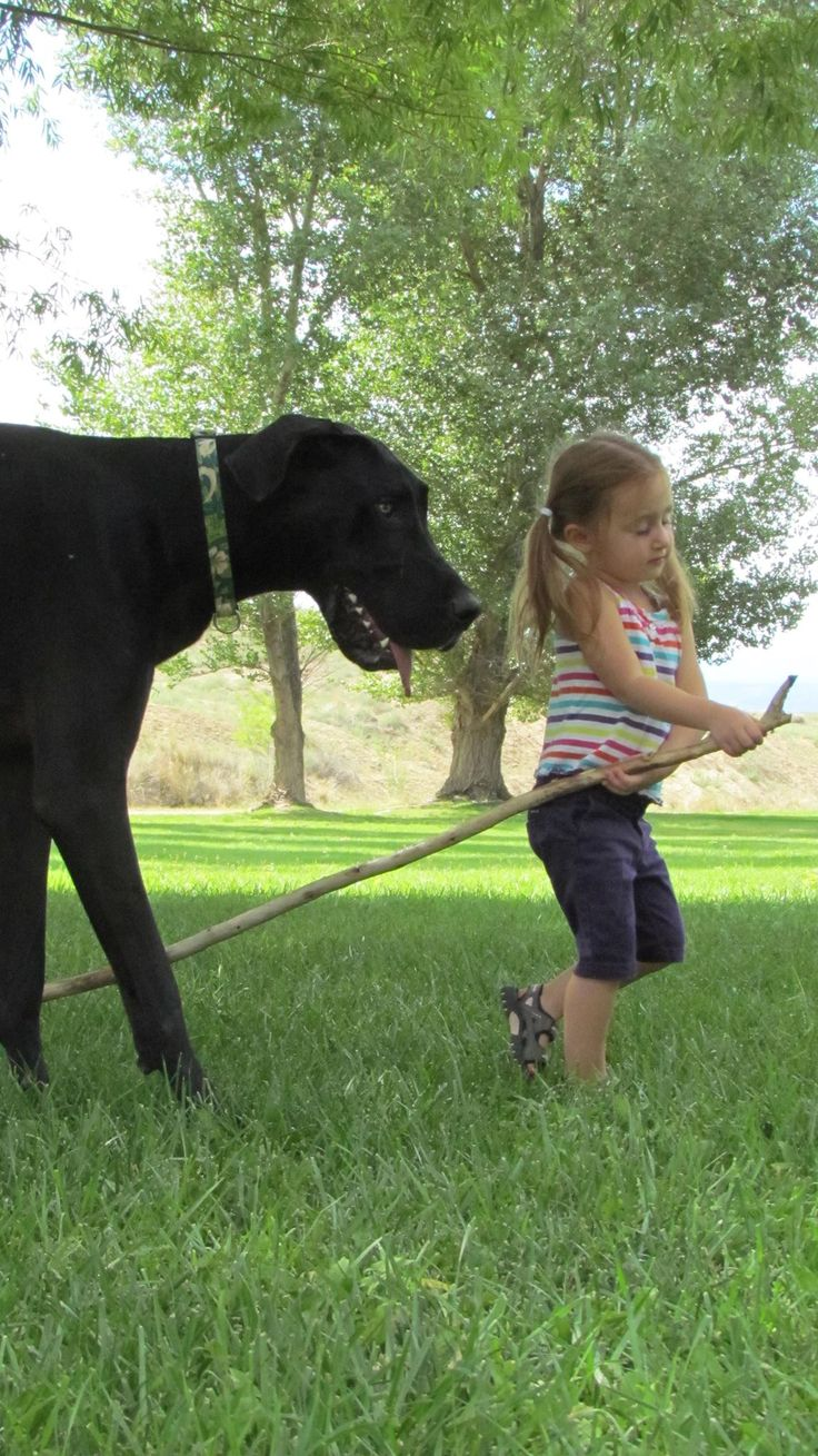 Anna and Brooster (Great Dane)