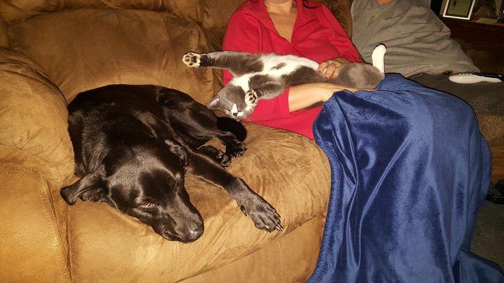 Doggo and cat stretching in mom's laphttps://i.redd.it/24m1kfxzvaj01.jpg