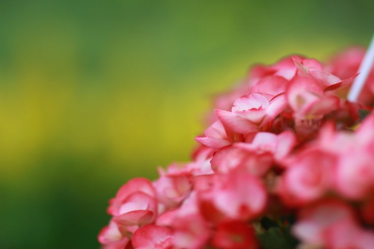 Flowers in Finland