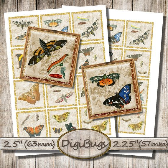 Vintage Printable Butterfly, Caterpillar Images, Digital Collage Sheet, 57 mm, 63 mm Squares, Digital Printable, Instant Download, a9