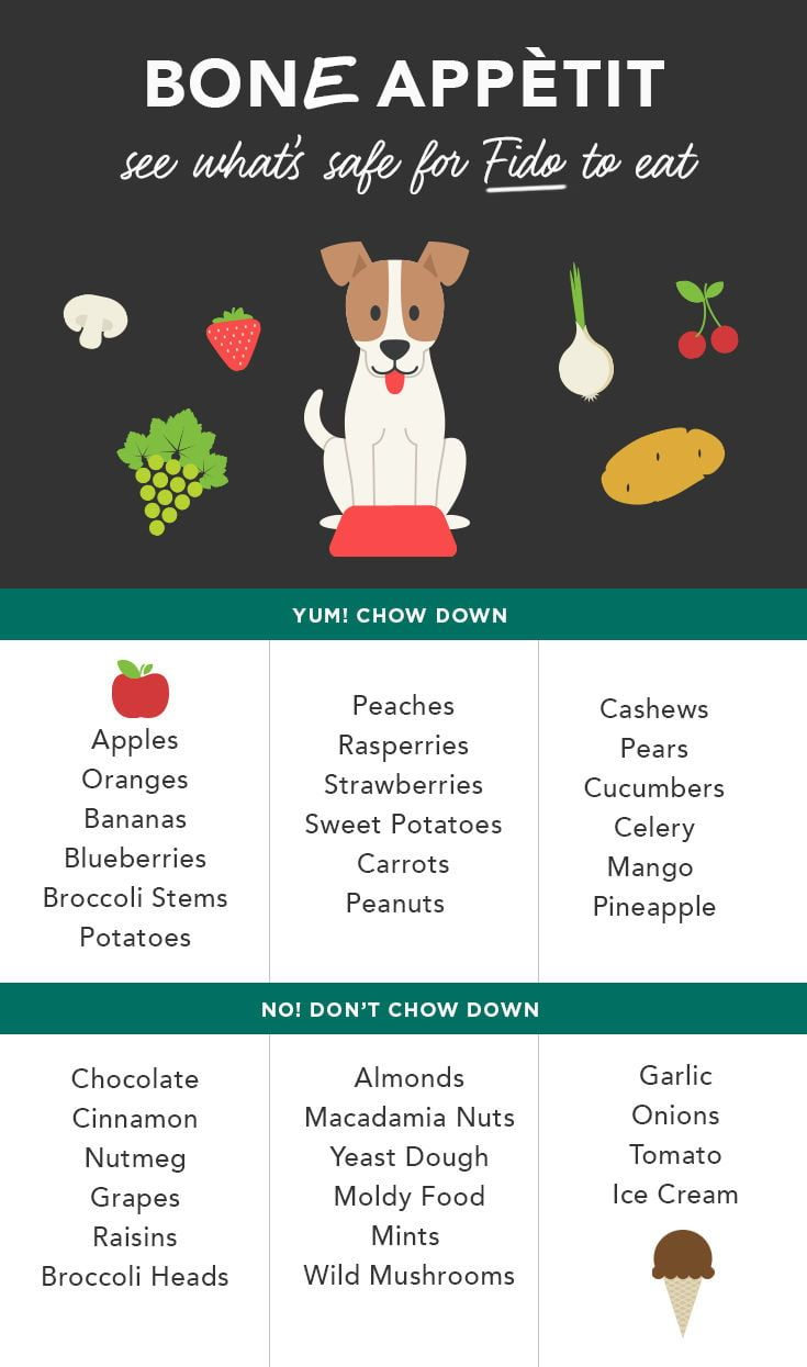 Can Dogs Eat Apples Experts Say Sure Dog Safe Food Foods Dogs Can Eat Can Dogs Eat Apples
