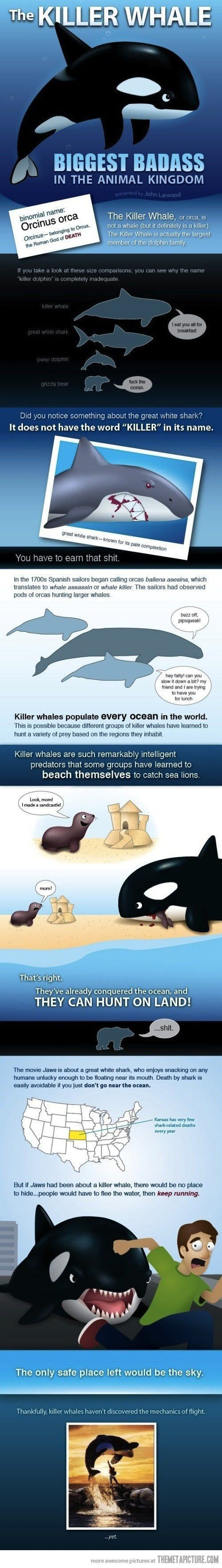 89 best amazing animal facts images on pinterest animal facts