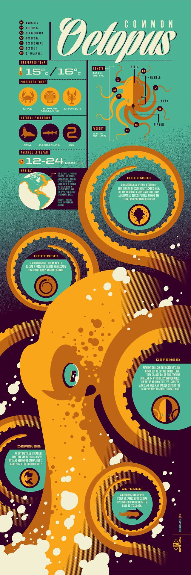 Stunning Infographic Art Series - Design - ShortList Magazine | Nothing common about the octopus