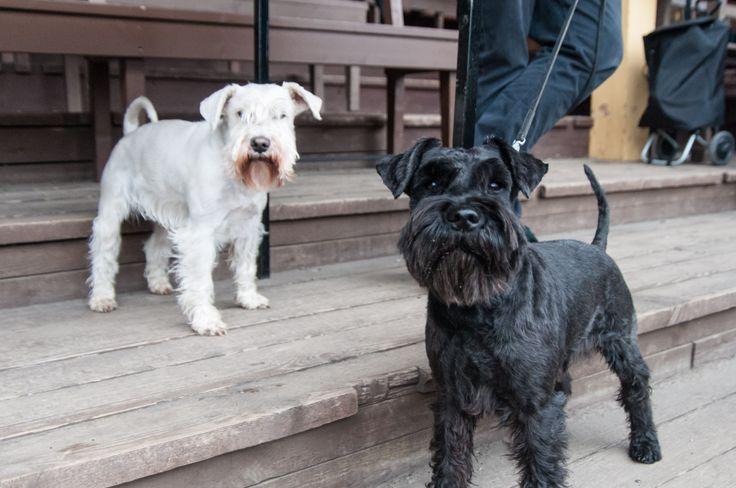 Meltwater -koirat nauttivat ulkoilmasta samalla, kun Meltawaterin edustaja verkostoitui työnhakijoiden kanssa.
