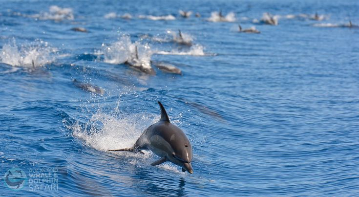 Auckland Whale and Dolphin Safari - World Class Conservation Tour. - The Ultimate Auckland Day Tour