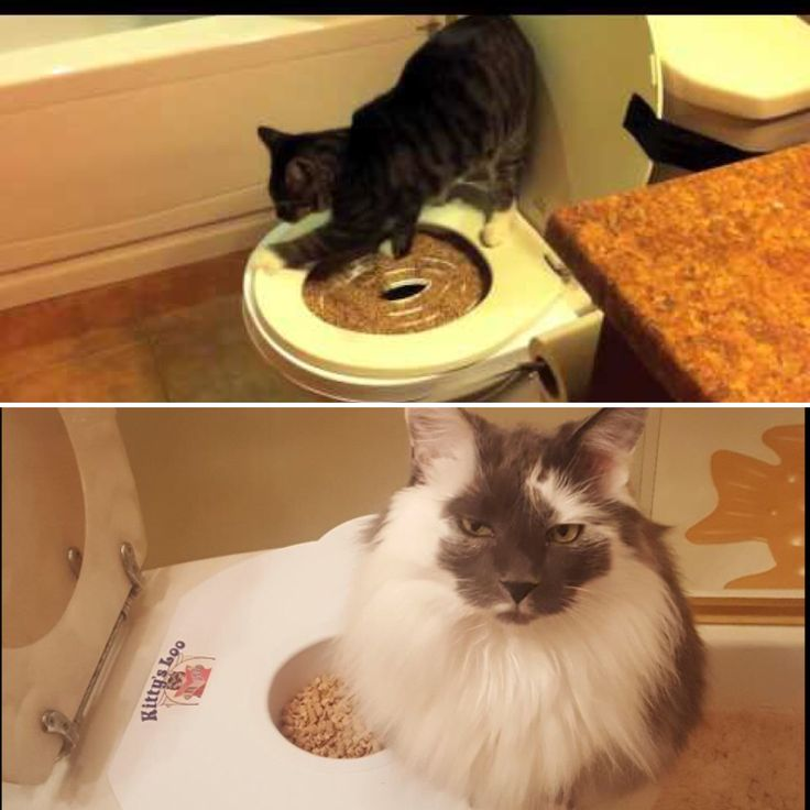 Toilet training your cat is easy when you train him on Kitty's Loo. They have plenty of room with the platform seat. Order yours today! www.kittysloo.com #kittysloo #kitty #cat #products #smallspace #smallbathroom #catlife